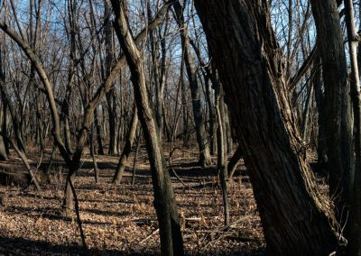 Cobb_River_Woods_2_web
