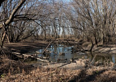 Cobb_River_Woods_3_web