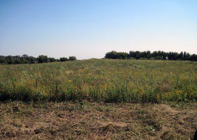 OA_Vee_Grass_2011_web