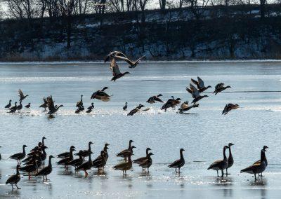 Spring_birds_MPI_WPA_web